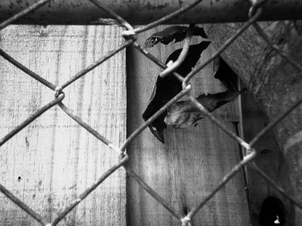Rusty Fence BW © Sandra Jean-Pierre