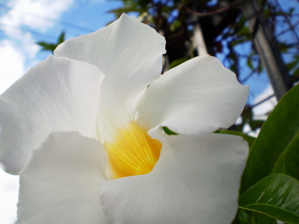 White Flower © Sandra Jean-Pierre